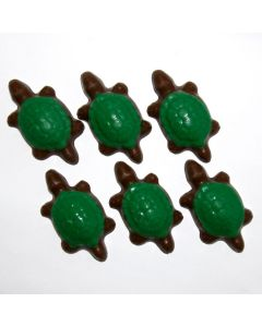 Turtles Hatchlings